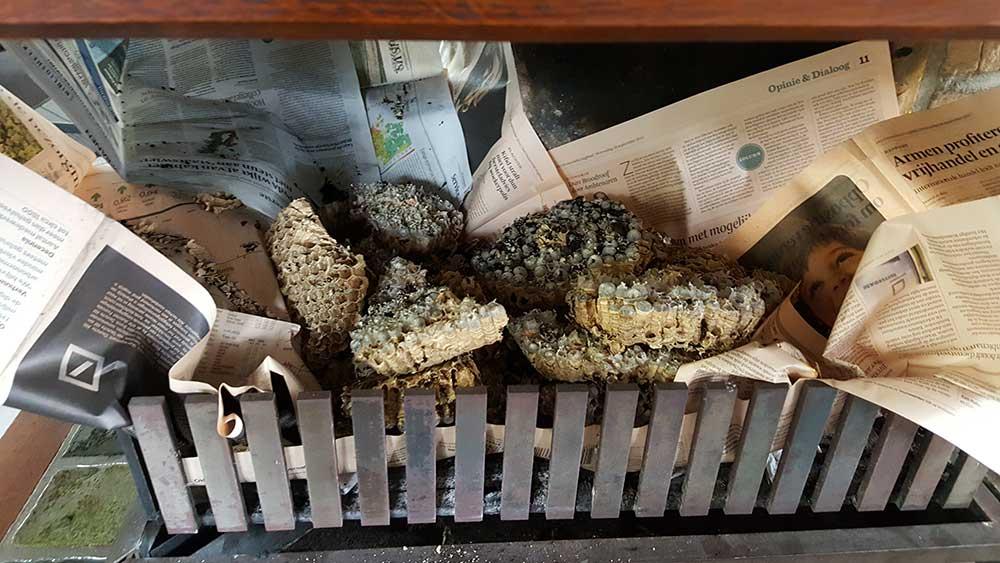 wespennest in schoorsteen