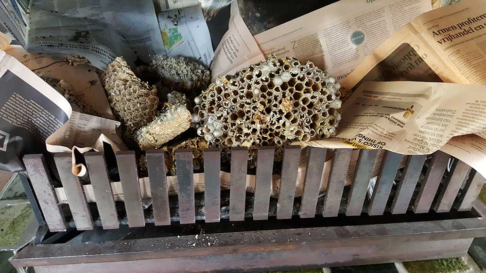 wespennest weghalen