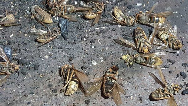 wespennest in rookkanaal