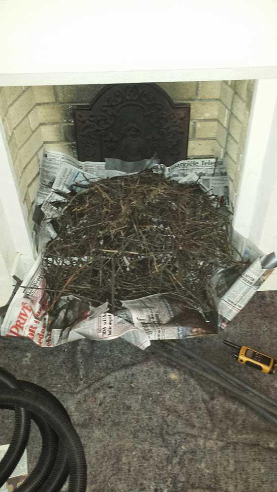 vogelnest-schoorsteen-verwijderen